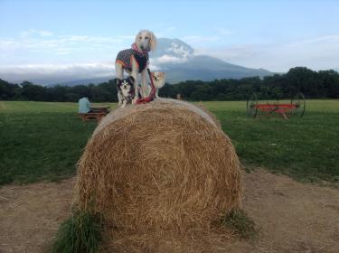 羊蹄山と一緒に♪