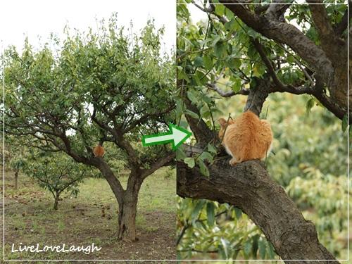 catsあき2