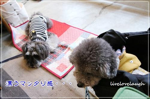 IMG_9767かふぇ6