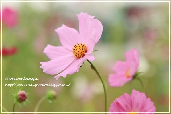 IMG_0616さんぽ1