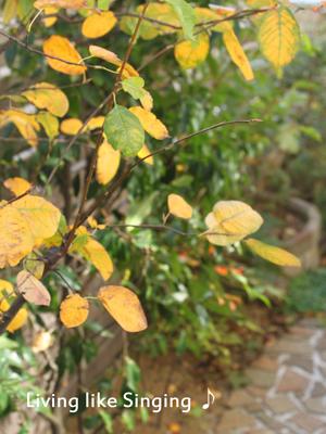 深まる秋の庭