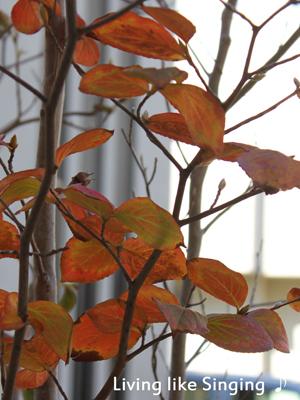深まる秋の庭2