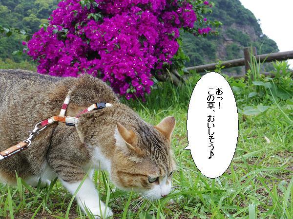草を食べたい