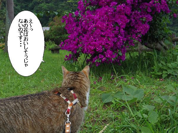 花では・・・