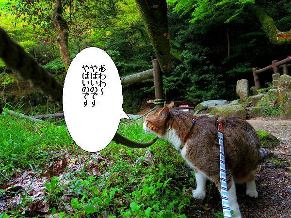 白糸の滝5