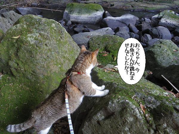 黄牛の滝10