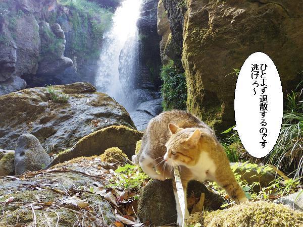 黄牛の滝8