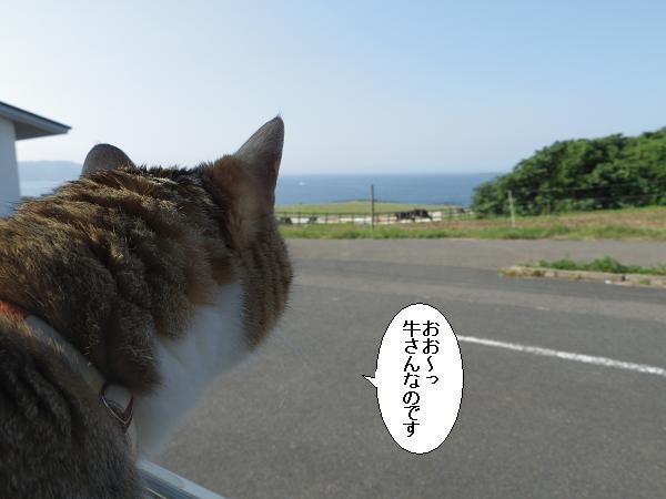 加部島22
