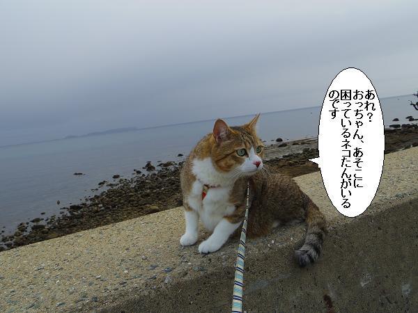 ある海岸7