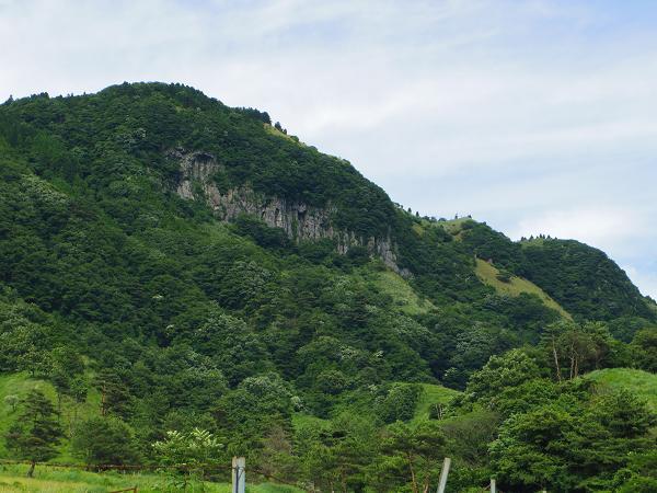 高森殿の杉3