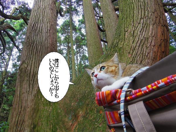 高森どんの杉15
