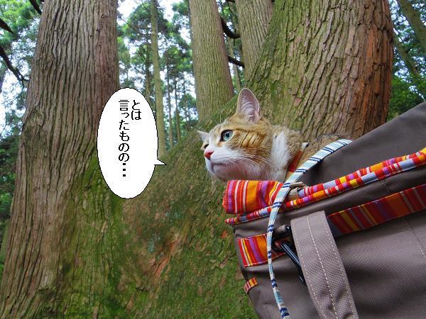 高森どんの杉14