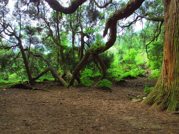 高森どんの杉16