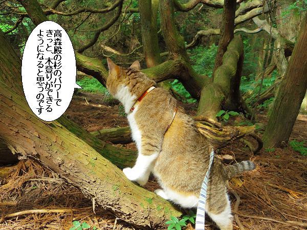 高森どんの杉27