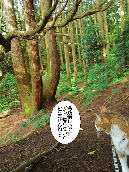 高森どんの杉32