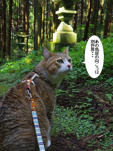 上色見熊野座神社19