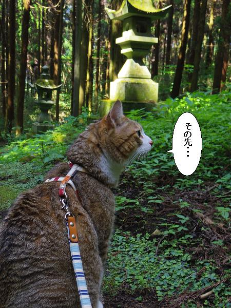 上色見熊野座神社18