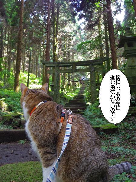 上色見熊野座神社30