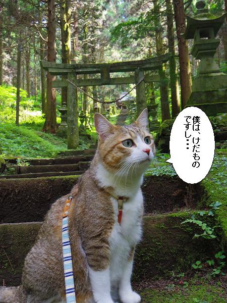 上色見熊野座神社27