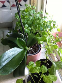 植物たち1