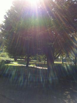 250813公園1