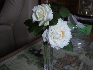 薔薇をいただいた日 002