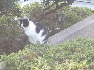 洋館の猫1