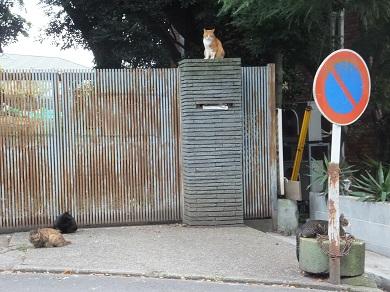 山手猫会議