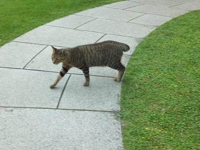 洋館の猫2