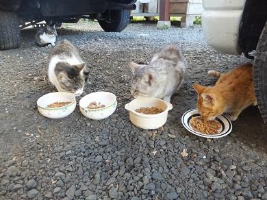 去年の外猫たち