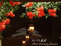 菖蒲&箱根20120616_127 rs