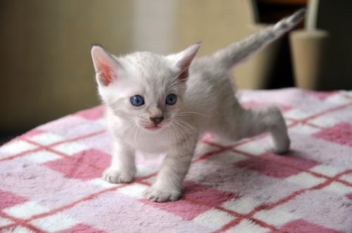 2012-09-22_kittens122.jpg