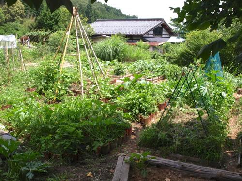 【もりのいえ】ガーデンの今20130710