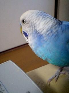 PA0_0311_201311102033000e9.jpg