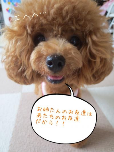 IMG_4013_convert_20130826105011.jpg