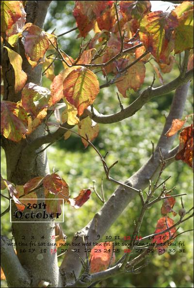 10月はがきカレンダーweb用紅葉