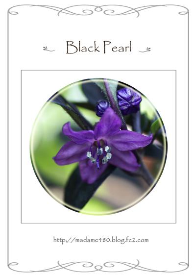 ブラックパール花web用