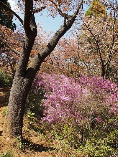 高尾山2013.4.13