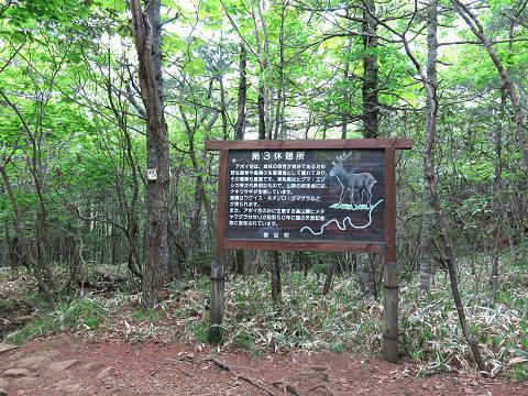 アポイ岳2013.6.12-3