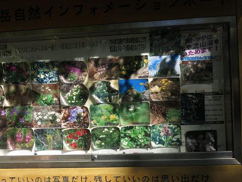 アポイ岳2013.6.12-2