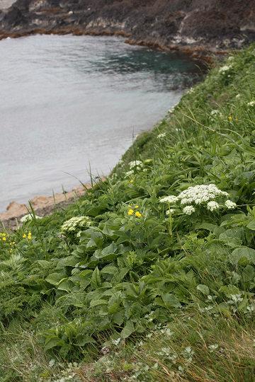 澄海岬2013.6.14-1