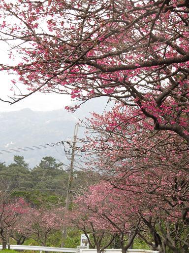 八重岳2014.1.15-2