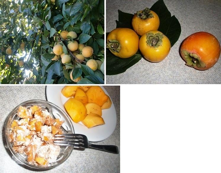 CIMG7063-2013柿①