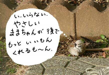頭の白いスズメは我が家のマスコット♪