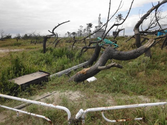 津波で傾いた木