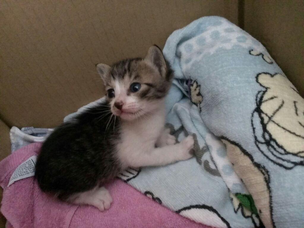 子猫9月19日(1)
