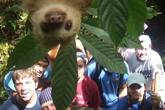 A sloth photobombs a group of students in Costa Rica