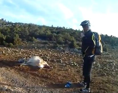 Cyclist Helps Cow Give Birth