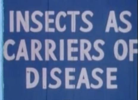 Insects as Carriers of Disease