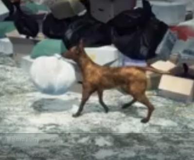 dog found baby